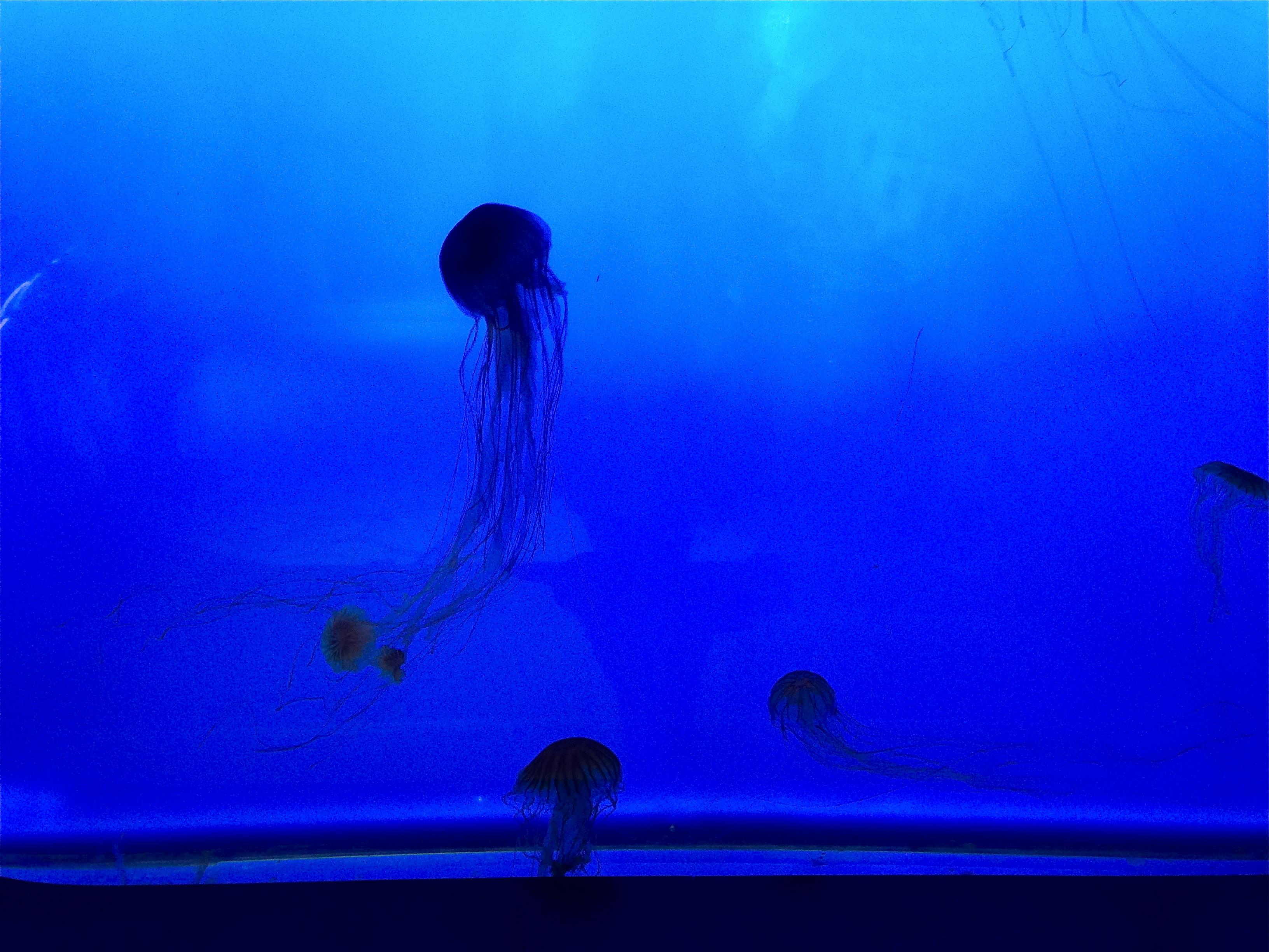 Visiting the amazing new england aquarium in boston girl New england aquarium tickets