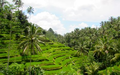 Visiting the Ultimate Paradise: Bali, Indonesia